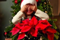 2019_poinsettia_01000_Christmas_Wishlist_07