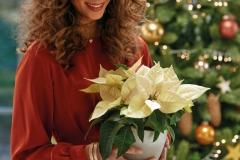 2020_poinsettia_05100_Christmas_Romance_07