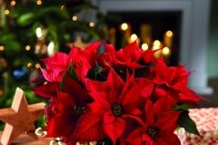 2018_poinsettia_0100_Christmas_Tales_15_1